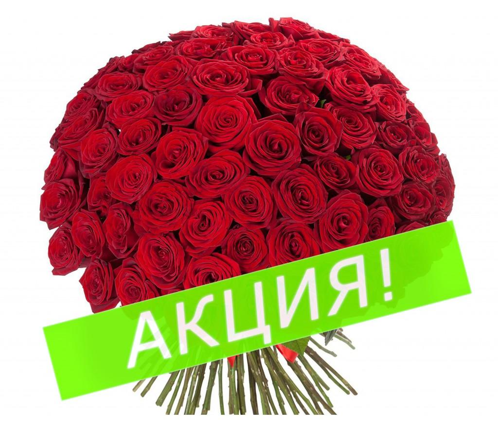 Букет из 101 красной розы №237